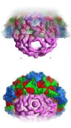 Proteoma-web